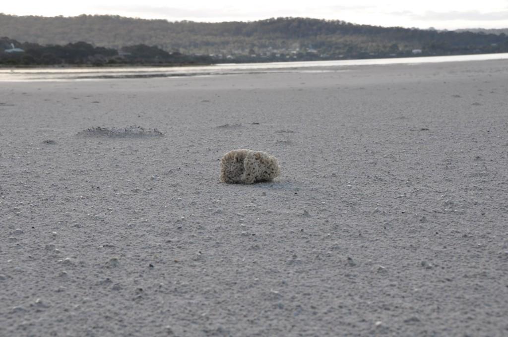 Lonesome sponge