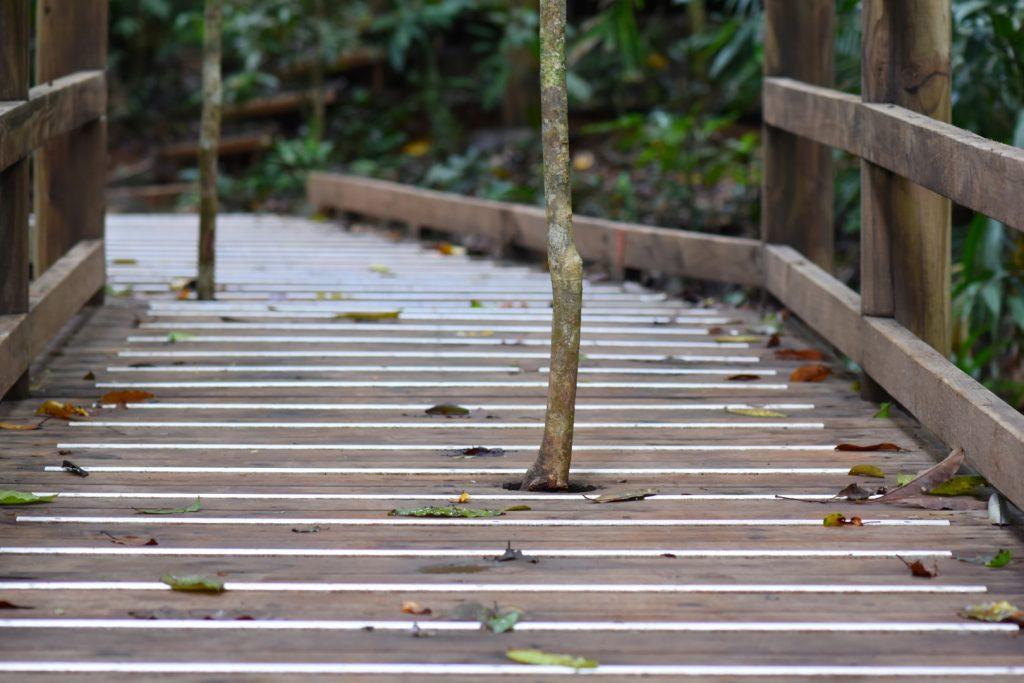 Minimal impact boardwalk