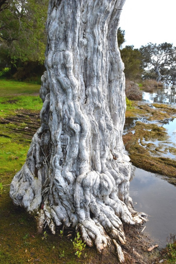 Magnificent tree trunk
