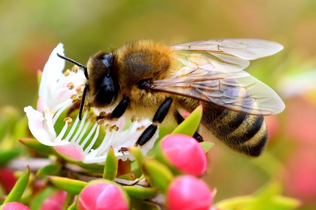Bee eating nectar
