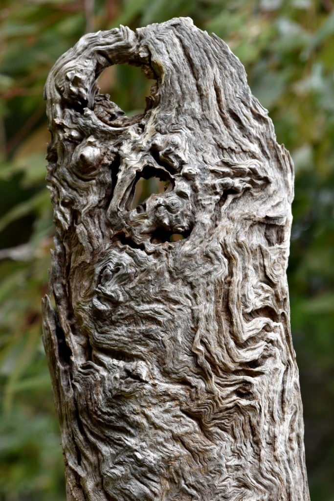 An old face