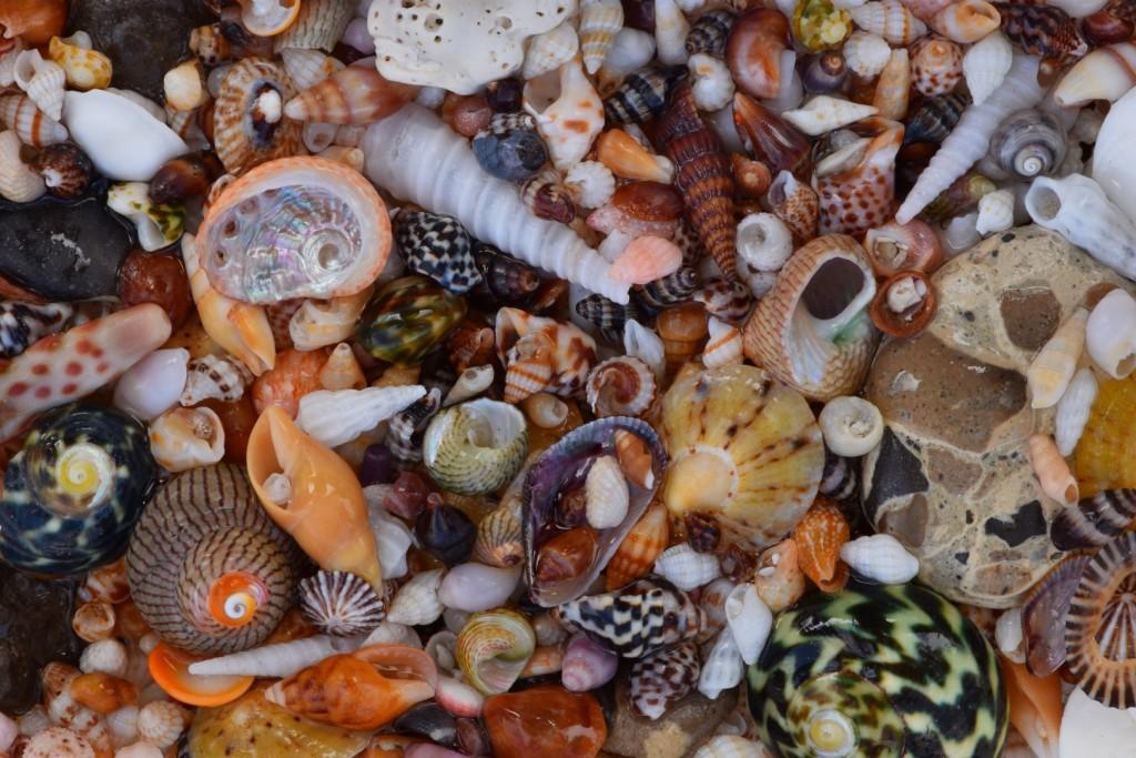 Point Sinclair shells