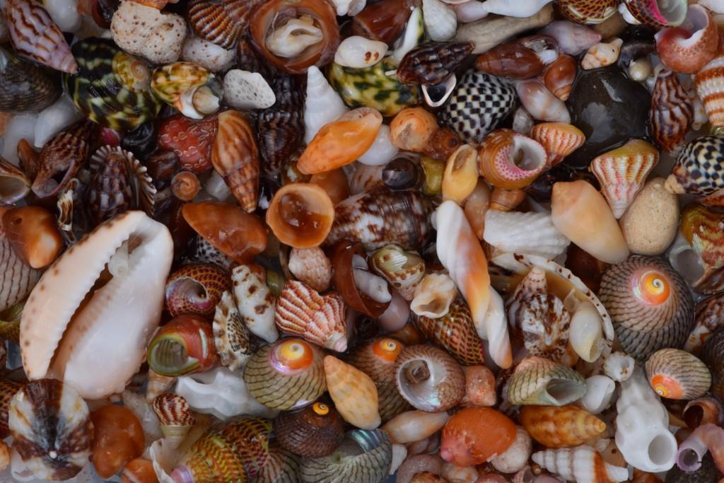 Cactus beach shell grit