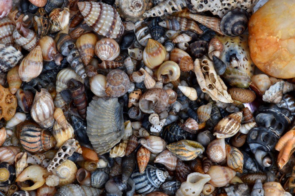 Melbourne shells